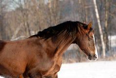 Porträt des netten Ponys auf einer Schneewiese Lizenzfreie Stockfotos