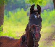 Porträt des Pferds Stockfotos