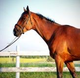 Porträt des Pferds Stockbilder