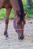 Porträt des Pferds stockfoto
