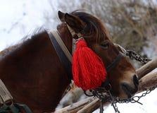 Porträt des Pferds mit rotem Quast am Karpatenbergdorf Stockfotos