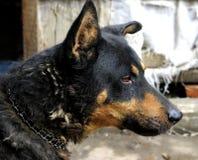 Porträt des reifen Hundes sitzend auf dem Hinterhof Lizenzfreies Stockfoto