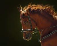 Porträt des roten Pferds Lizenzfreies Stockfoto
