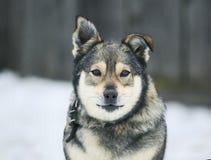 Porträt des schönen Hundes schauend recht Lizenzfreie Stockbilder