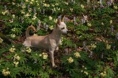 Porträt des schönen weißen Babyhundes auf den wilden Blumen des Berges Lizenzfreie Stockfotografie