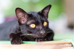 Porträt des Schauens der schwarzen Katze Stockbilder