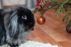 Porträt des schwarzen Kaninchens Stockbild