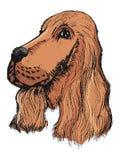 Porträt des Spaniels Stockbild