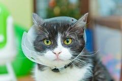 Porträt des tragenden Sicherheitskragens der Katze Lizenzfreie Stockfotos