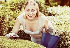 Porträt des weiblichen Gärtners grüne Hecke im Yard trimmend stockfotos