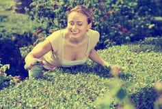 Porträt des weiblichen Gärtners grüne Hecke im Yard trimmend stockbilder