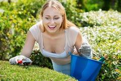 Porträt des weiblichen Gärtners grüne Hecke im Yard trimmend stockbild