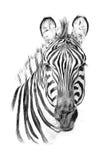 Porträt des Zebras eigenhändig gezeichnet in Bleistift Lizenzfreie Stockfotografie