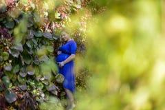 Porträt eine reizende junge blonde schwangere Frau Lizenzfreie Stockbilder