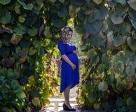 Porträt eine reizende junge blonde schwangere Frau Stockfotos