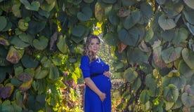 Porträt eine reizende junge blonde schwangere Frau Stockbilder