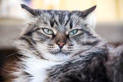 Porträt einer ernsten Katze stockbilder