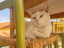 Porträt einer großen Katze auf einem Stuhl Stockbild
