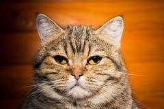 Porträt einer Hauskatze Stockbilder