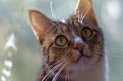 Porträt einer inländischen shorthair Katze Stockbilder