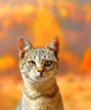 Katzenporträt in Herbst färbt Hintergrund Stockfoto