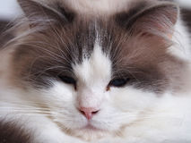 Porträt einer Katze stockbild