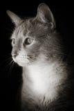 Porträt einer Katze Lizenzfreie Stockfotos