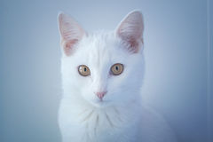 Porträt einer Katze Stockbilder
