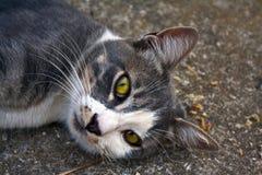 Porträt einer Katze, die auf dem Grundanstarren liegt Stockfotografie