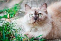 Porträt einer Katze im Freien im Garten stockfotos