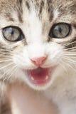 Porträt einer kleinen Katze Lizenzfreie Stockbilder