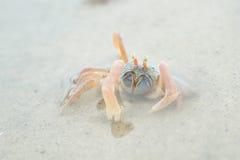 Porträt einer Krabbe Lizenzfreie Stockfotos