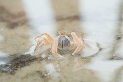 Porträt einer Krabbe Stockbild