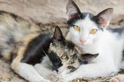 Porträt einer netten farbigen Katze mit gelben Augen Lizenzfreie Stockfotografie