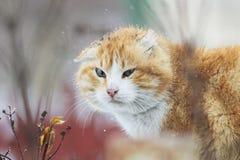 Porträt einer roten Katze während Schneefälle Stockbilder