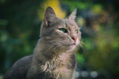 Porträt einer schönen Katze Stockfotografie