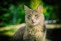 Porträt einer schönen Katze Stockfoto