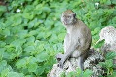 Porträt eines Affen Stockbilder