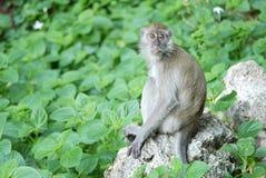Porträt eines Affen Lizenzfreies Stockbild