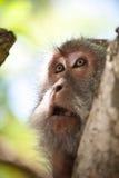 Porträt eines Affen Lizenzfreie Stockbilder