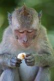 Porträt eines Affen Stockbild