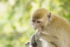 Porträt eines Affen Stockfotos