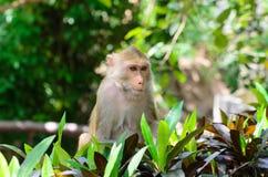 Porträt eines Affen in den wild lebenden Tieren Stockfoto