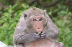 Porträt eines Affen in den wild lebenden Tieren Lizenzfreies Stockbild