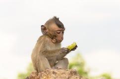 Porträt eines Affen in den wild lebenden Tieren Lizenzfreie Stockbilder