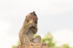 Porträt eines Affen in den wild lebenden Tieren Lizenzfreie Stockfotografie