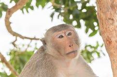 Porträt eines Affen in den wild lebenden Tieren Stockfotos
