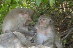 Porträt eines Affen in den wild lebenden Tieren Stockbilder