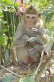 Porträt eines Affen in den wild lebenden Tieren Stockbild