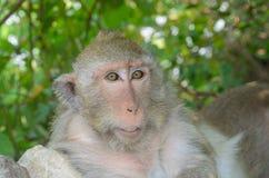 Porträt eines Affen in den wild lebenden Tieren Stockfotografie